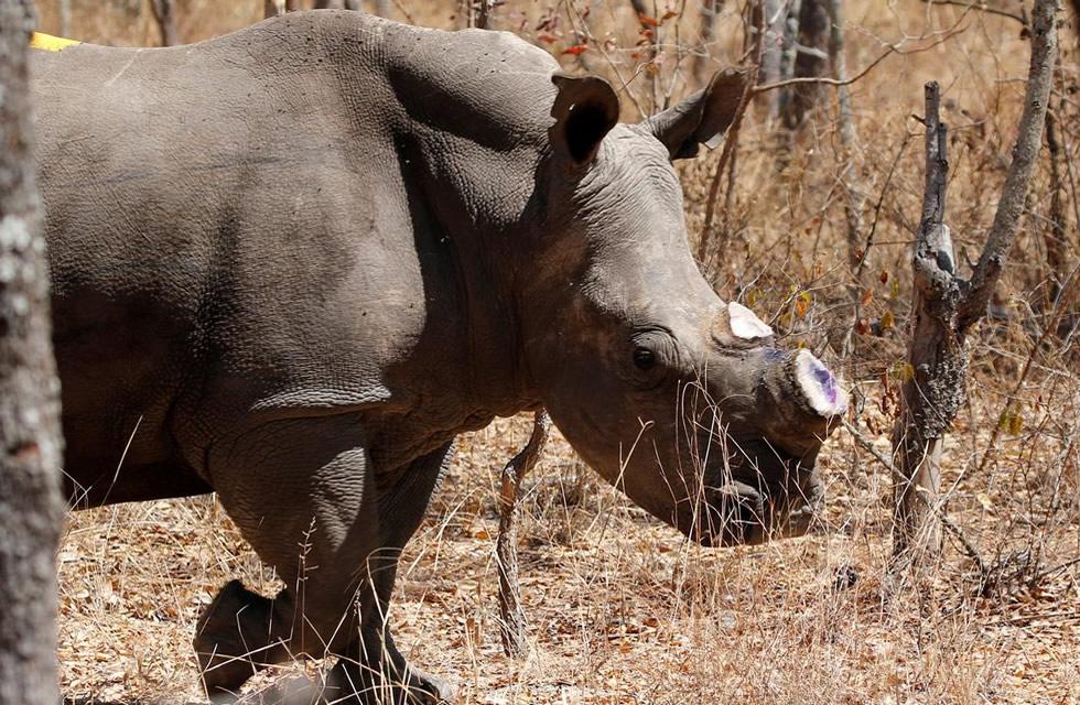 Zimbabwe Rhinos