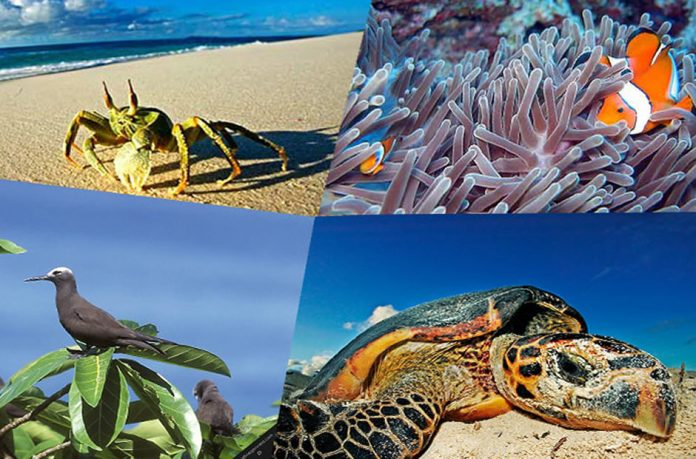 Wild Seychelles